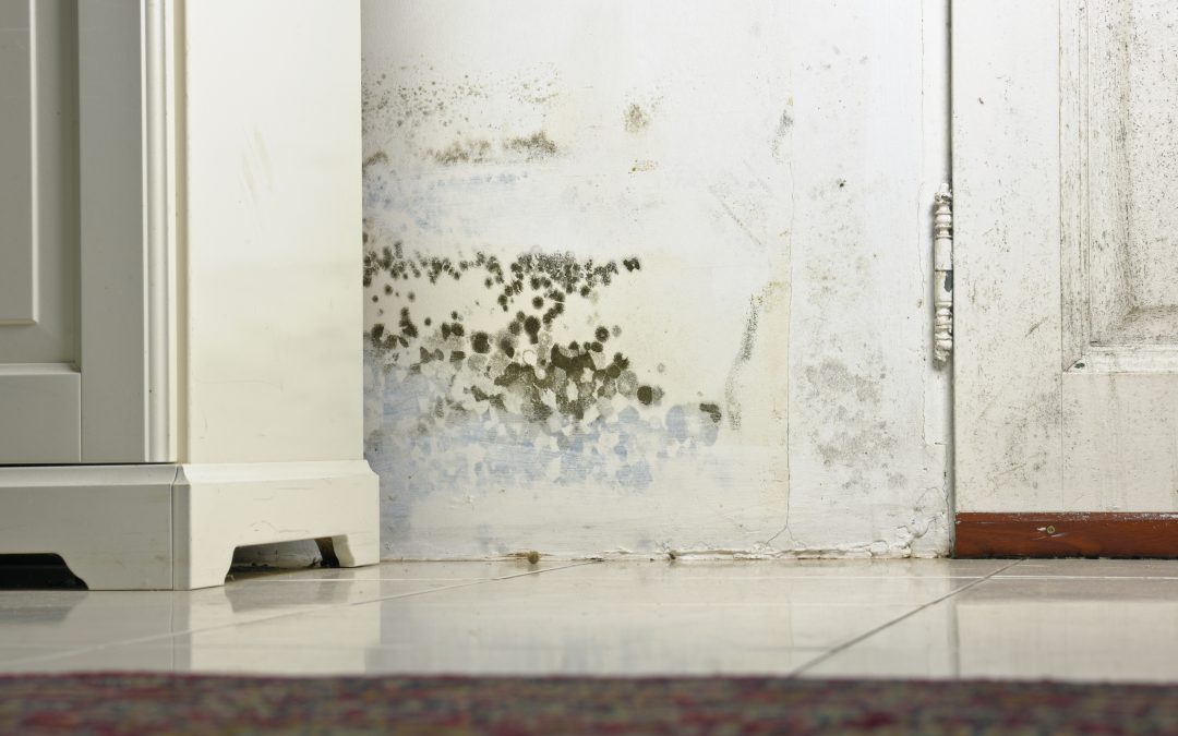 How to prevent mold growth after water damage?