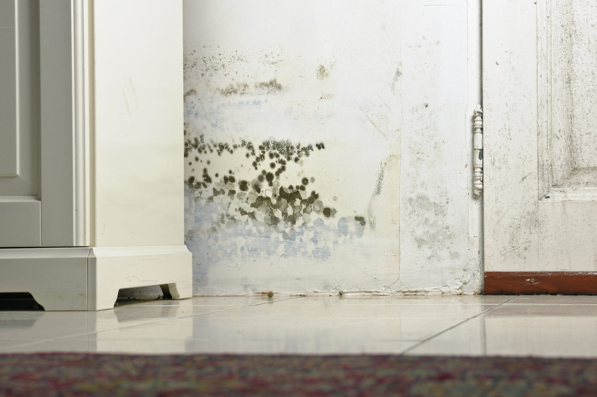 Mold remediation in New York City