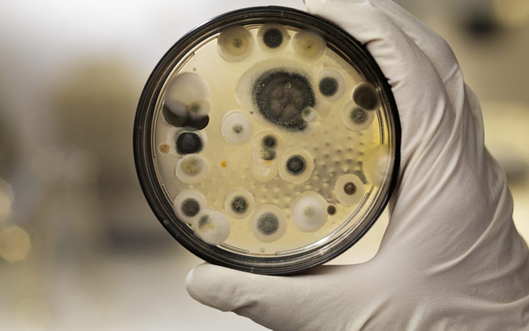 Common cause of mold in the home